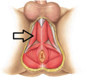 pelvic therapy Male physical